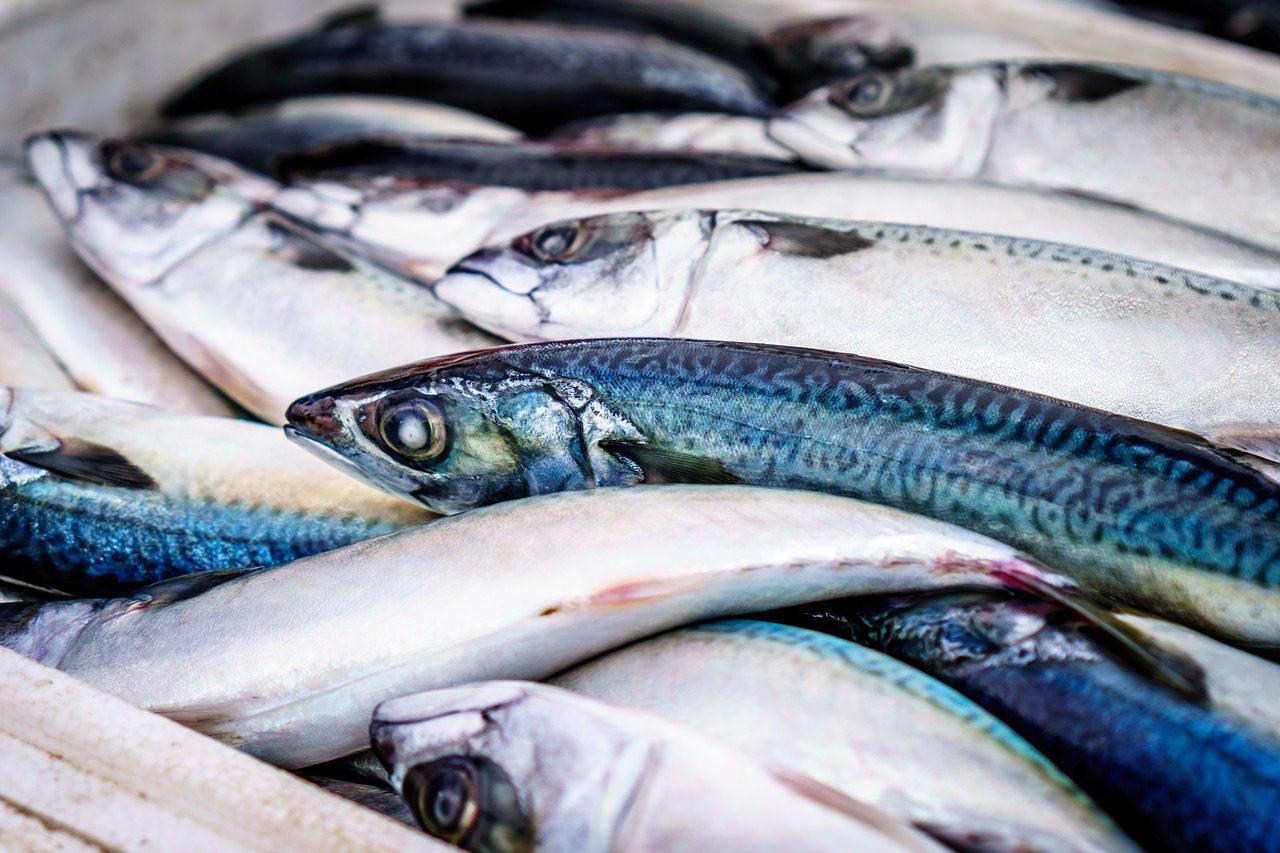 anisakis sardinas